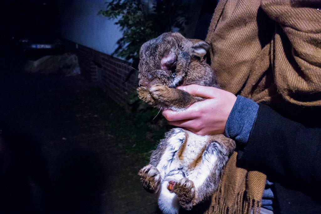 kaninchen-vier-tierretter-1