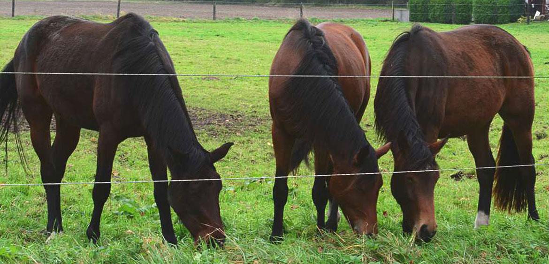 Pferde-Herzebrock-top