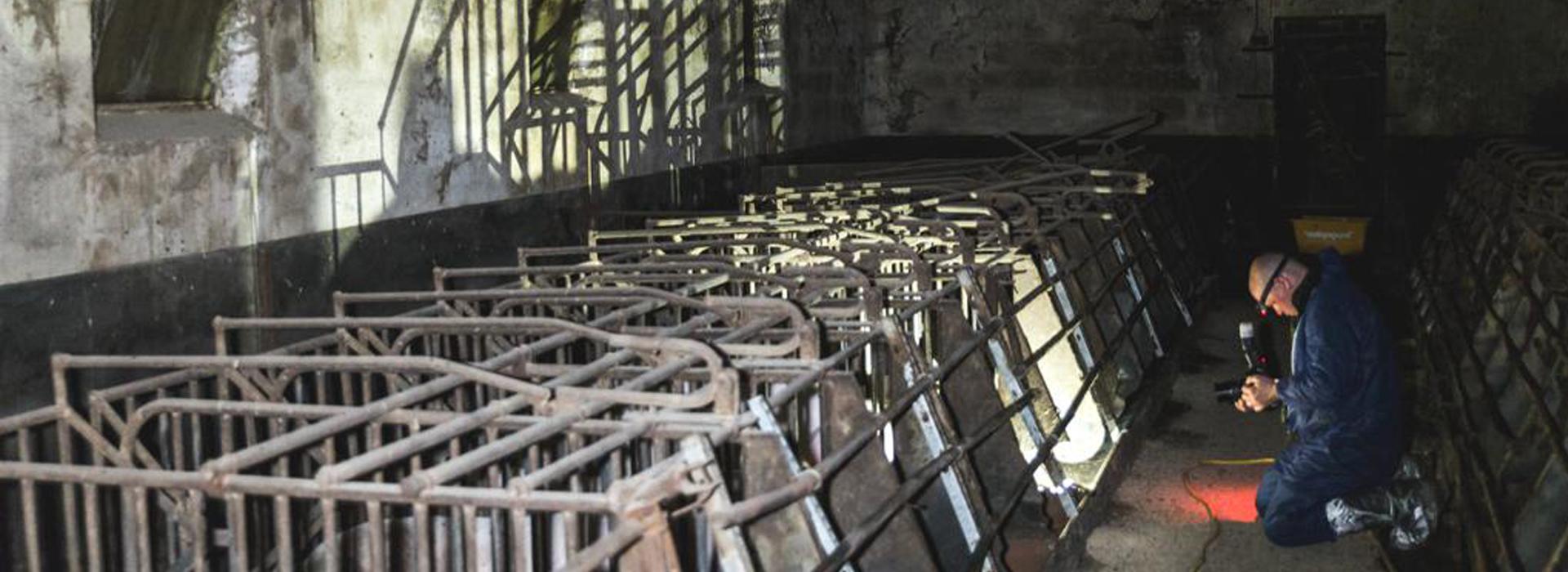 Schweinezucht-kabel1-tierretter-slider