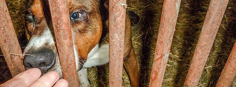 Hundezwinger-Ahlen-tierretter-de