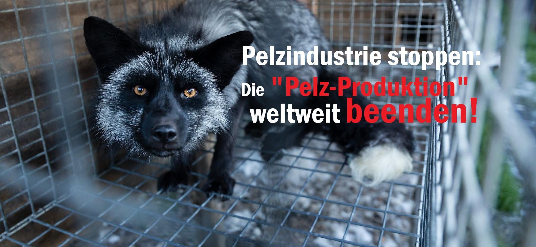 PelzproduktionFuchsP3